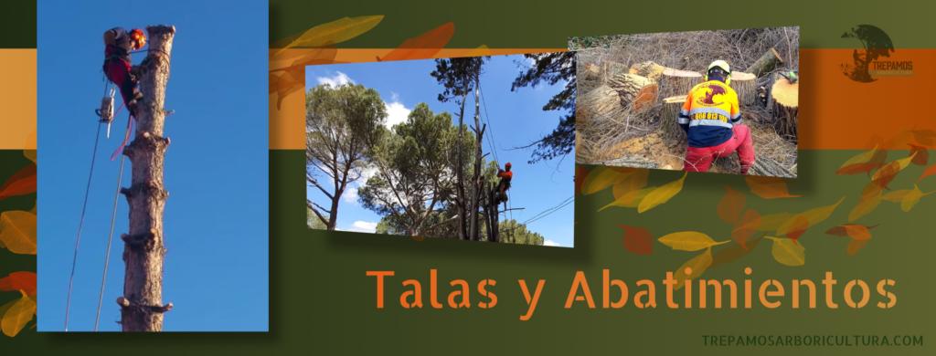 talas de árboles en Madrid y alrededores