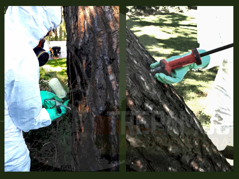 Tratamiento contra las plagas y enfermedades de los árboles endoterapia