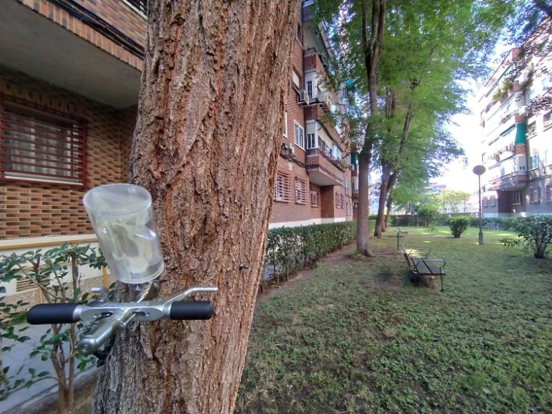 Trepamos Arboricultura tratamientos contra enfermedades de los árboles