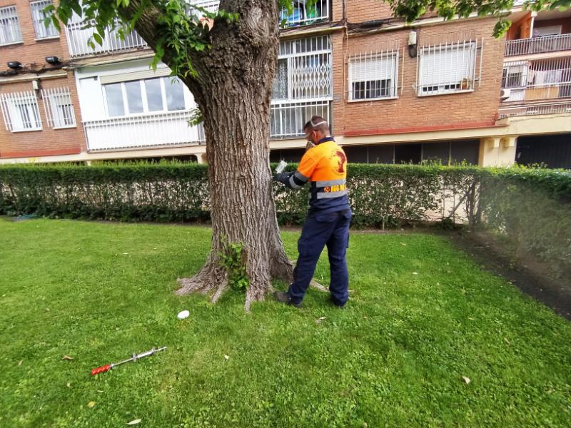 Carlos de trepamos arboricultura Endoterapia podas y talas