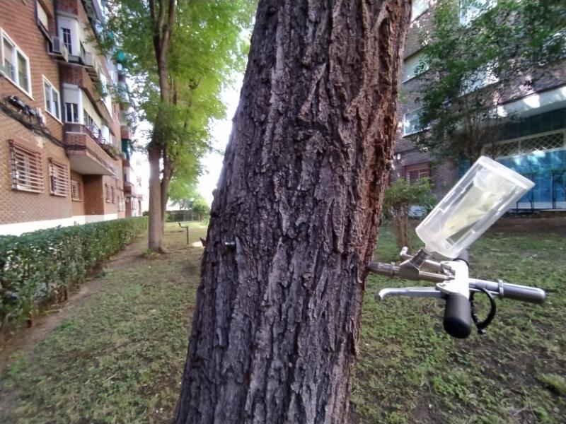 Endoterapia podas y talas trepamos arboricultura