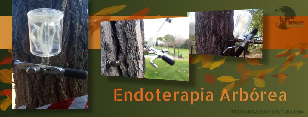 Endoterapia arbórea contra las plagas de los árboles
