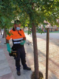 Endoterapia arbórea en parques y jardines