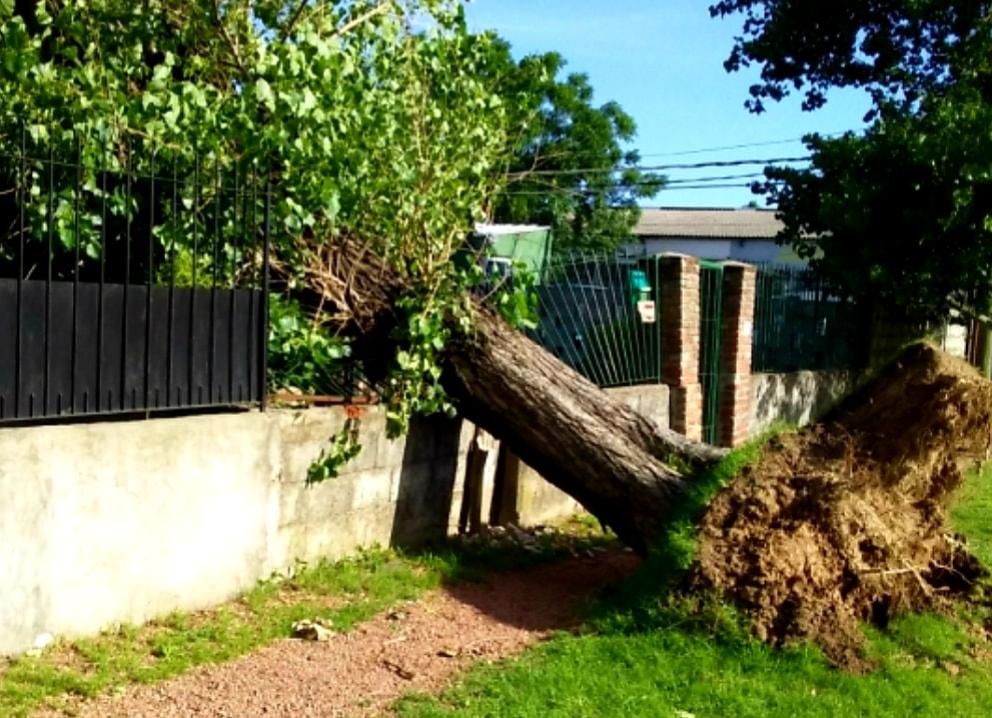 tala de árboles caídos