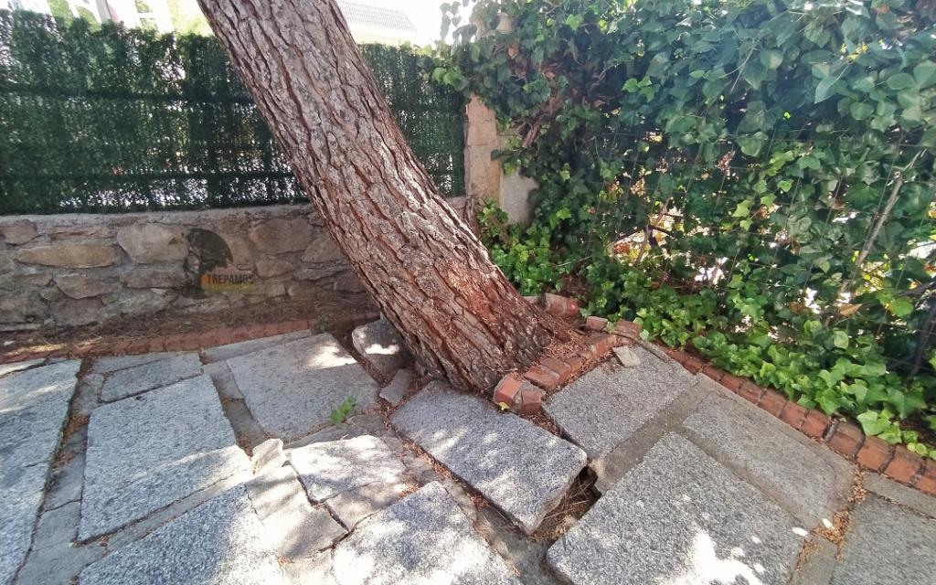 árboles inestables urgencias de arbolado