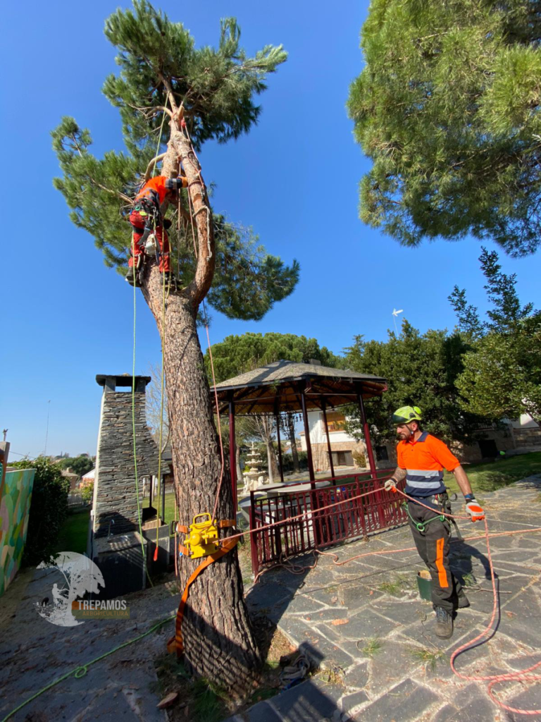 tala controlada de árboles Madrid